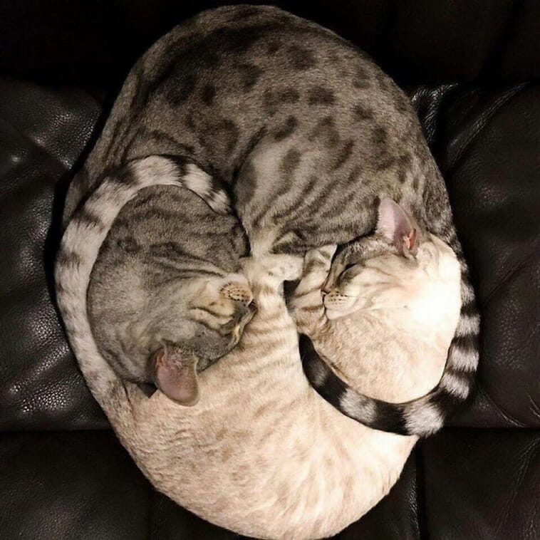 Perfectly Cozy, Curled Up Cats